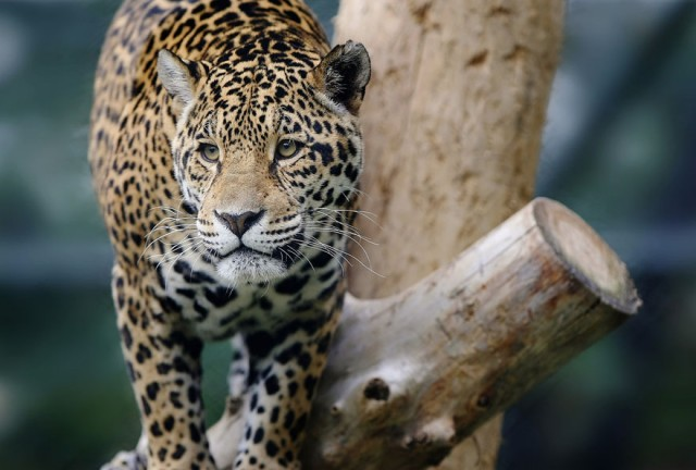 zoo-animals-photography15-640x432.jpg